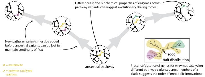 Phylometabolomics